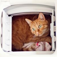 cat in the washer by oxygen2608