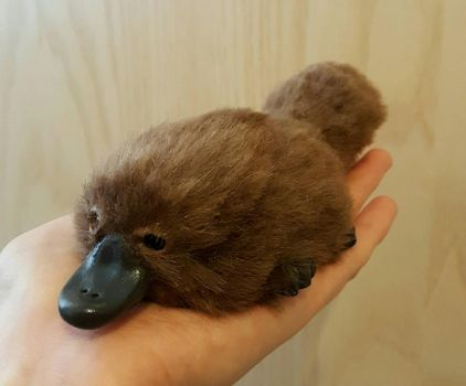 Platypus Art Doll by Kay-Sarah