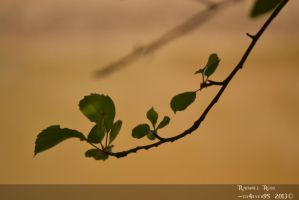 Tree Branch Leaves by ily4ever95