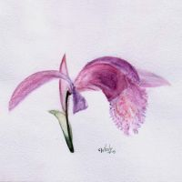 orchid by BelovVitaly