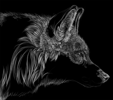 Wolf scratch WIP by nightspiritwing