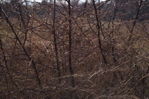 Thorn Bush by Very-Free-Stock