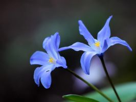 Harbingers of Spring by TruemarkPhotography
