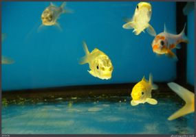 Fish Stock 0071 by phantompanther-stock