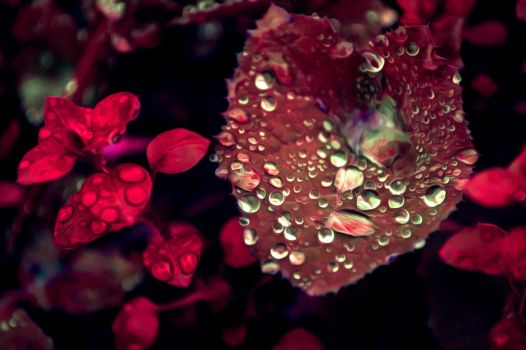 Leaf with water drops after rain Oil Paint Style by Th3R3v3nan7