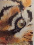 Eye of a Tiger by MaBull
