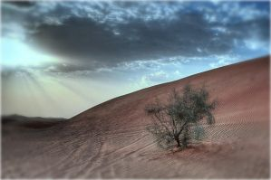 Lonely Desert -  I-Stock by I-Stock-Photos