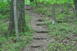 Trail Path by FantasyDesignStock