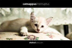 purr_1 by input-output
