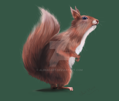 Squirrel by AliMacArt