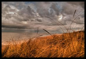 snooze in the dunes by db156