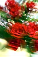 Roses in motion by BimaFatima