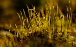 Mossy Widescreen by webcruiser