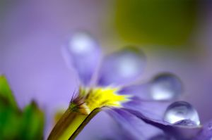 The Life And Motion Of A Drop by nightmedia
