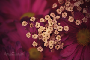 Baby's Breath by XBrokenXPorcelainX