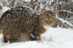 Snow cat by TcnBiob