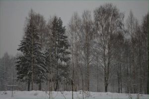 Black winter's day by AnnFrost-stock