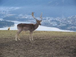 Deer 1 by wildthyme-stock