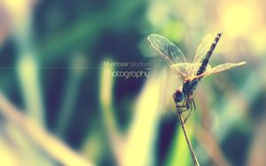 Helicopter by muddassir