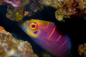 Fish by LCPhotography