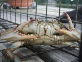 The Deadliest Catch by Dongiovar