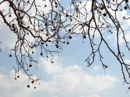 The Tree With Earrings by csibecsont