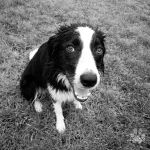 Ilou 6 octobre 2014 by roon1305