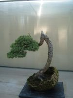 Bonsai 020 by aurochstock