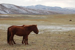 Horse in Mongolia by kyoko9