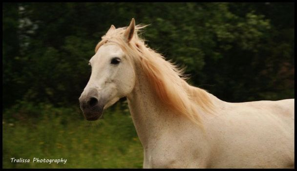 Fenda by TralissaAndalusians