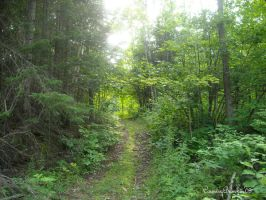 Green Trail by CountryBumkin