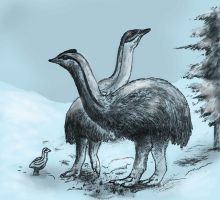 Ice age birds by Hyrotrioskjan