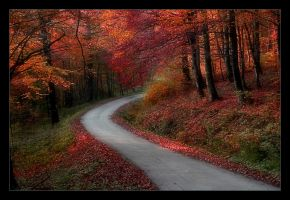 Forest Road by RaVeN8472