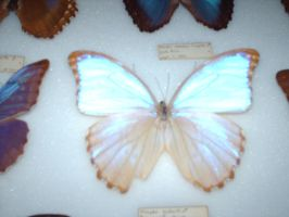 butterfly underglass by WiccanSilver