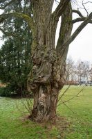 tree trunk 04 by NellyGrace3103