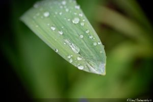 Drops on the Leaf by Auraomega