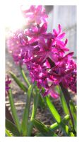 Joyful, Joyful by cera