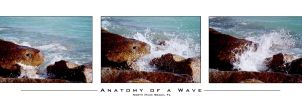 Anatomy of a Wave by hippiespic