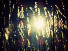 Sun-kissed grass by Stlbluesgirl101