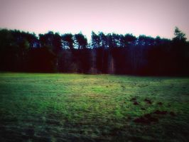 Green Meadow in December by TomSimpson96