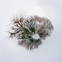 ikebana planet by oblious