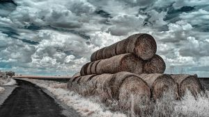 Harvested Bales by myINQI