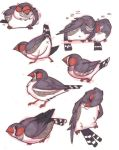 Zebra Finches by ToonPirate