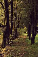 Stock - Autumn Path by DreamChaseStock