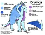 Druilica Reference Sheet by hollyann