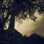 wishing tree 1 by Calisto-Photography