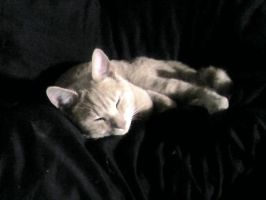 My Puddy kitten by take-me-for-who-i-am