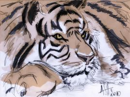 tiger resting by scarecrowhassan