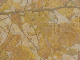 Pressed Leaves Texture 4 by FantasyStock