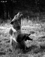 laughing bear by Yair-Leibovich